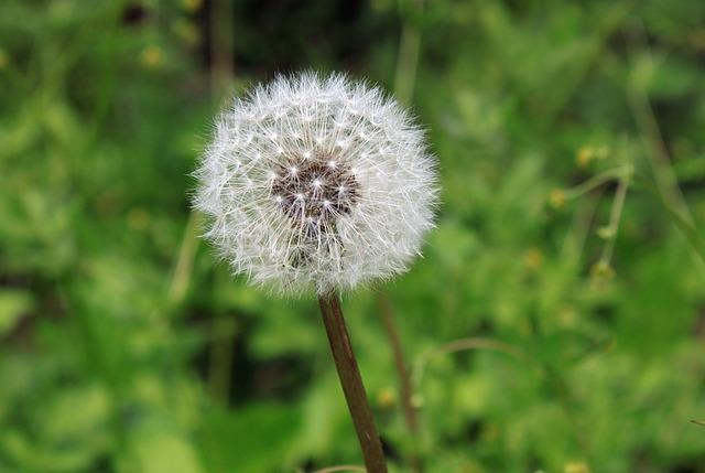 artificial grass prevents hay fever